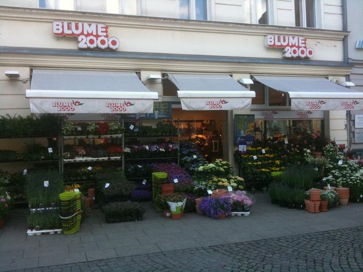 BLUME 2000 - Carl-Schurz Straße