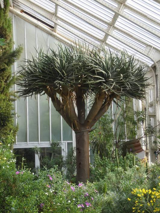 Botanischer Garten und Botanischer Garten und Botanisches Museum Berlin-Dahlem