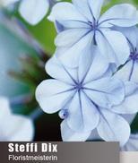 Floristmeisterin Steffi Dix