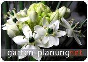 GartenPlanung GartenBeratung GartenGestaltung